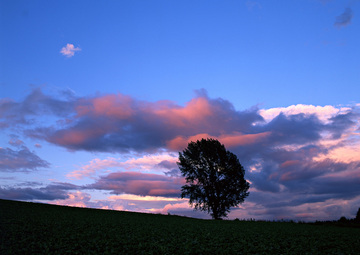 夕日と1本の樹
