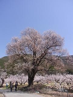 春光景.JPG