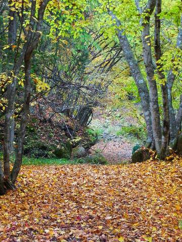 森の小径.JPG