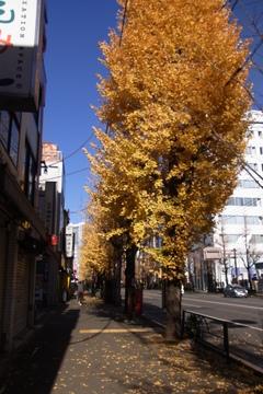 暮れの白山通り.JPG