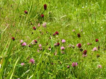高原の花.JPG