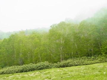 草原の輝き.JPG