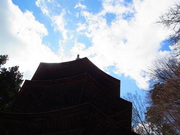 天を仰ぎ見る.JPG