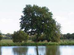 水辺の大木