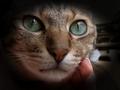 猫の目のサムネイル画像