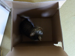 a cat in the box