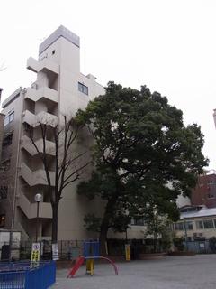 東京千代田区の大木