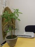 アートフラワー(植物)