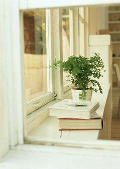 窓辺の本と植物