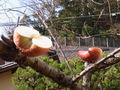 枝に刺したリンゴ